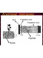 Управление азотом