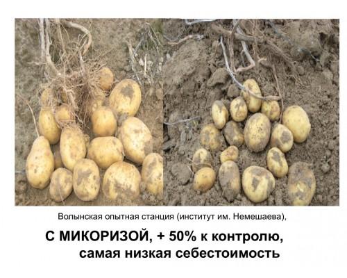 MycoApplySuperconcentrate 10 (endo) 226,8 г  (5 млн. спор)